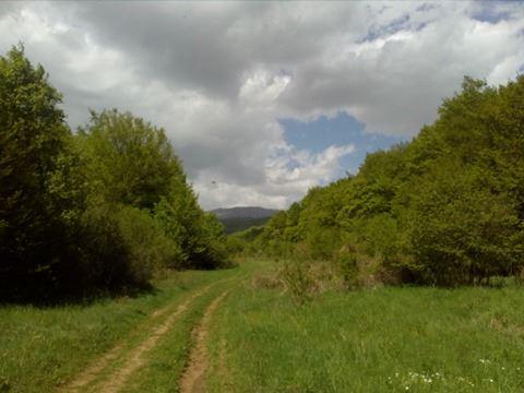 местността Живата вода Боснек