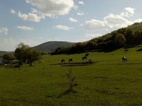спокойствие в Боснек