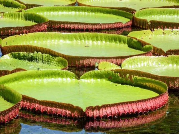 ботаническа градина мавриций